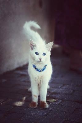 gata bonita blanca