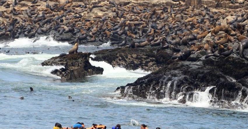 PASEO EN LAS ISLAS DEL CALLAO: Conoce los Lobos Marinos y Pingüinos en la Costa Peruana [VIDEO] Turismo en Isla San Lorenzo - Isla El Frontón - Isla Cavinzas - Isla Palomino