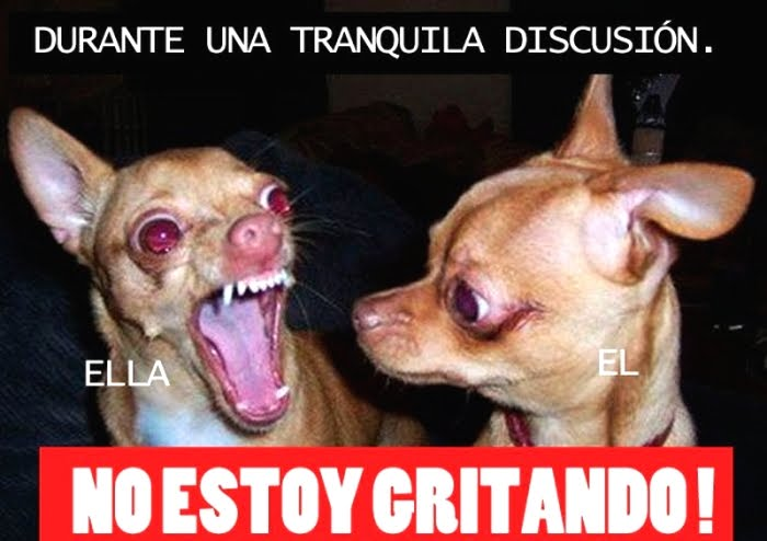 Imagenes Graciosas Chistosas Memes para reir de perros chihuahua