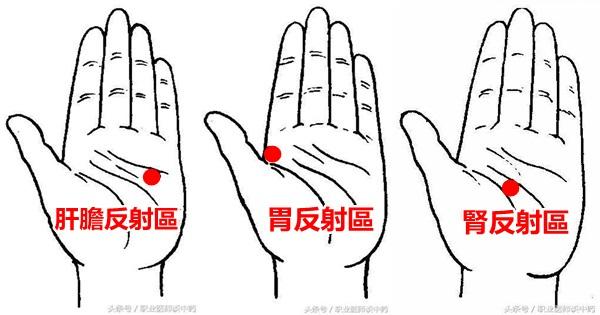 手掌上的肝膽區、胃區、腎區