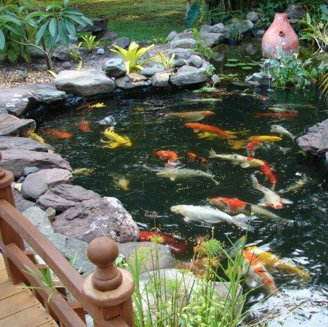 60 photos of small eye catching backyard ponds ideas for for Best koi pond design 2017