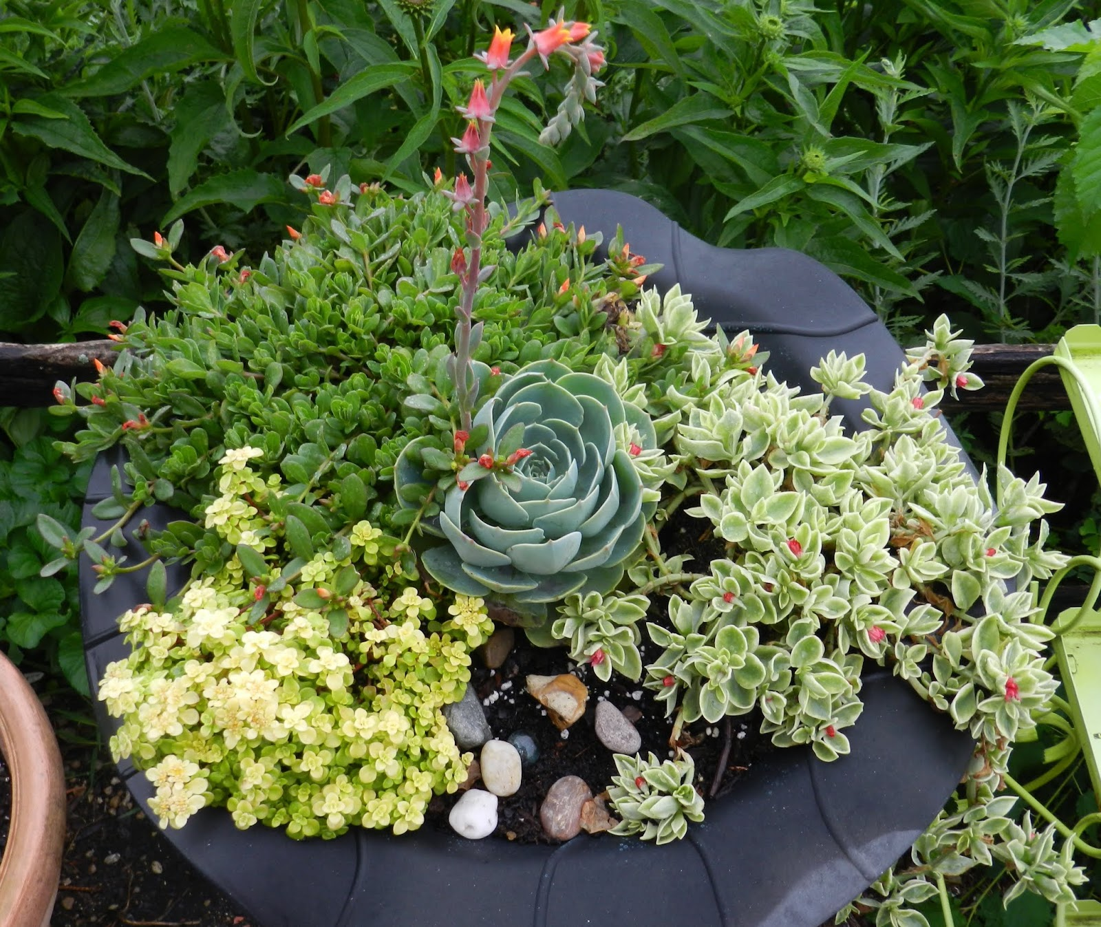 Ive Discovered I Really Like Succulents This Combo In An