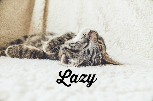 photo of a lazy cat lying on his back