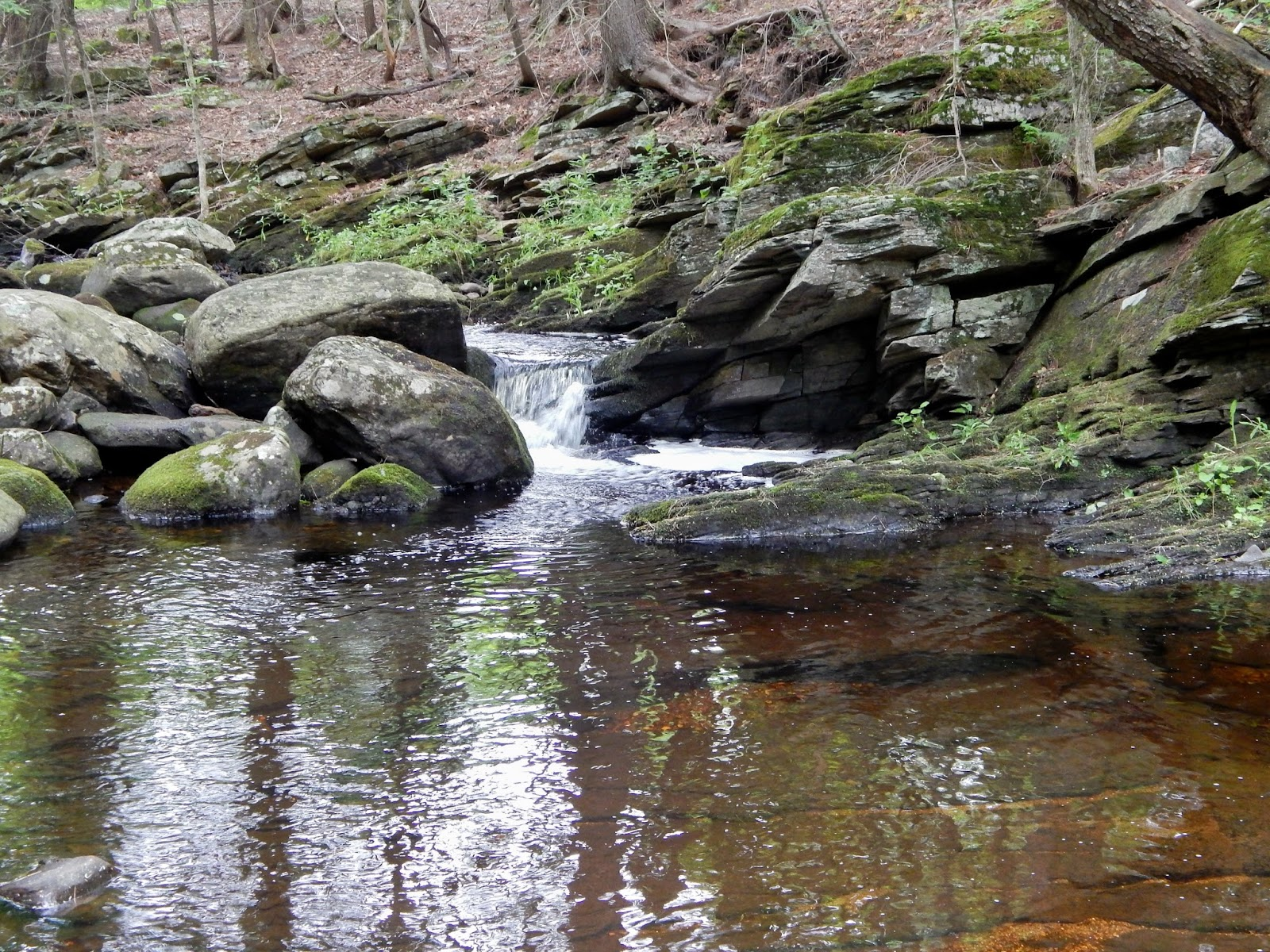 Small stream reflections the farmington river and for Farmington river fishing report