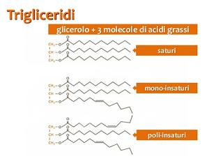 Unti e Bisunti Gli Oli Vegetali Parte Uno  composizione chimica