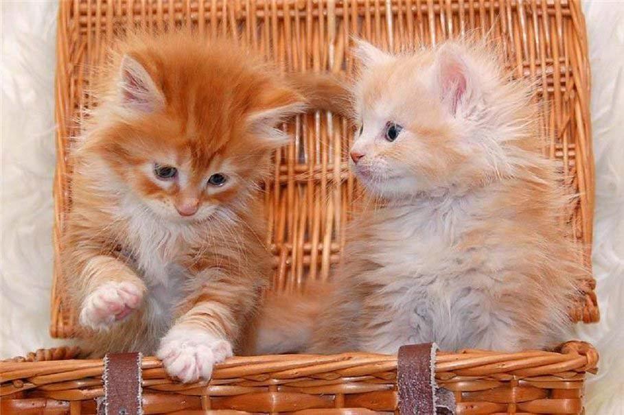 anak kucing kecil dalam keranjang
