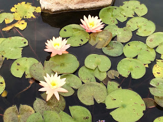 water plants in spring