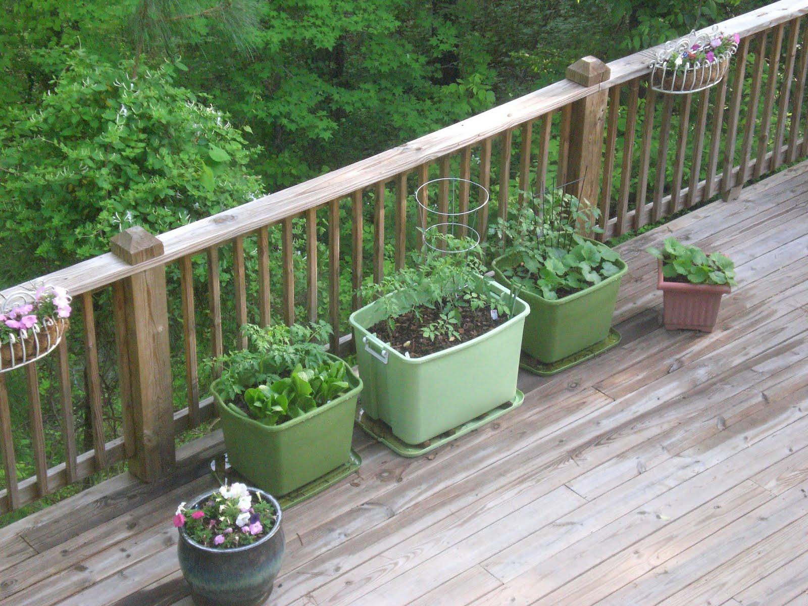 Back Porch Garden Rubbermaid Container Garden
