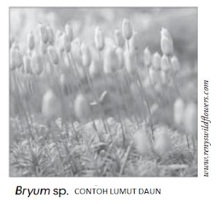 Lumut Daun (Bryopsida)