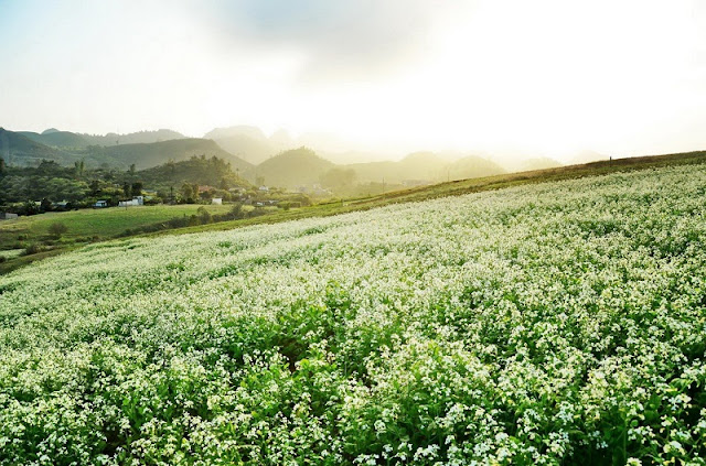 Top 5 tourist destinations in northern Vietnam most attractive in the Spring 1