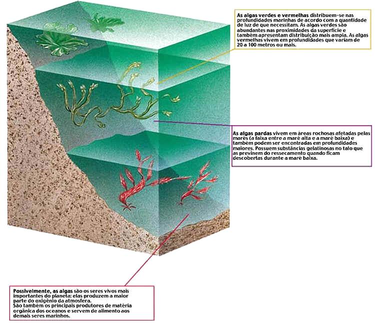 Algas, Características das Algas
