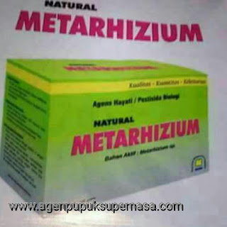 pestisida Natural Metarhizium