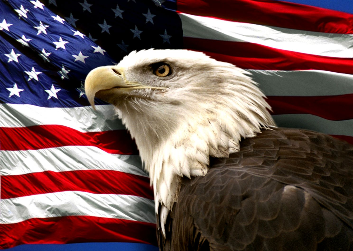Patriotic Bald Eagle Wallpaper Pack Wallpapers