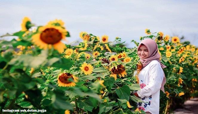 Wisata Kebun Bunga Matahari Jogja diburu Selfie Mania