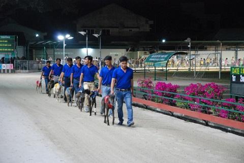 Cá cược đua chó ở Việt Nam thu hút sự quan tâm của nhiều người