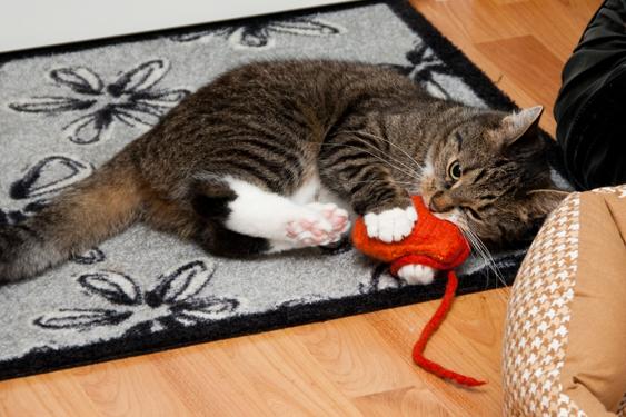 Kissan leikkikäyttäytyminen