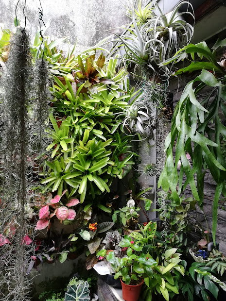 My Vertical Garden Wall