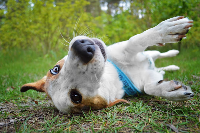 Pies w lesie Warszawa