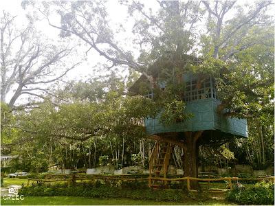 Philippine Tree House