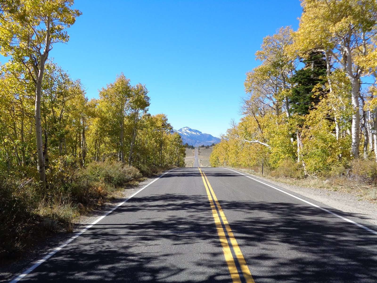 Autumn on State Route 89