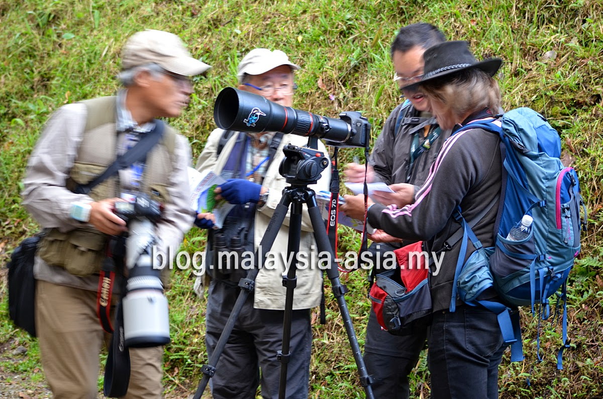 Japanese Birders in Malaysia