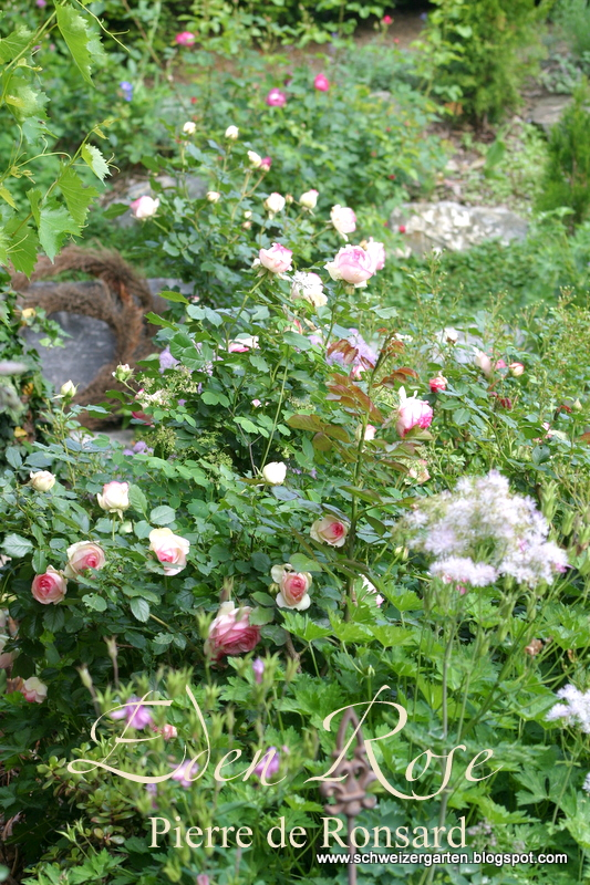 Welche Blühenden Blumen Sind Winterhart Wohn Design