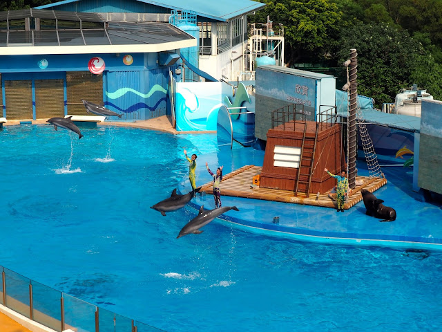 Dolphins and sea lion performing in the Ocean Wonders show at Ocean Park