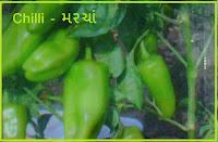 chili seeds Ahmedabad India