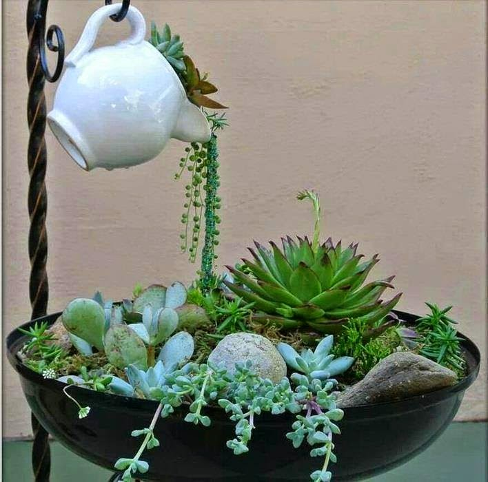 Mini jardim e arranjos com suculentas jeito de casa for Decoracion con plantas suculentas