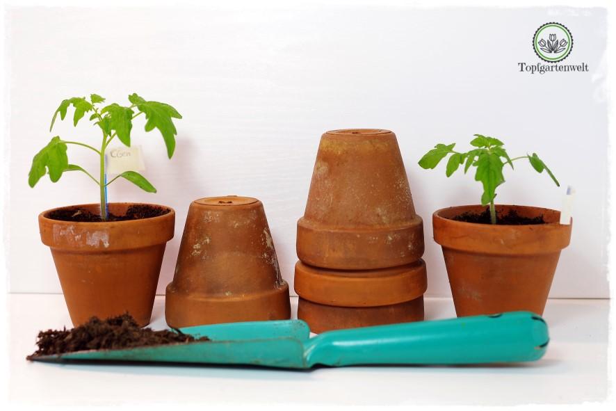 grow box aussaat und anzucht von pflanzen mit hilfe von passender beleuchtung. Black Bedroom Furniture Sets. Home Design Ideas