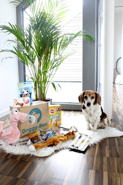 Doggy Box | Lintgen, Luxembourg