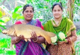 Carp Fish with Cauliflower Cooking in Village by Girl & Mom | Village Food Factory & Life