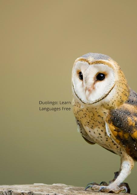#duolingo German language free#duolingo arabic language free download#duolingo english language free download#duolingo Spanish language free download