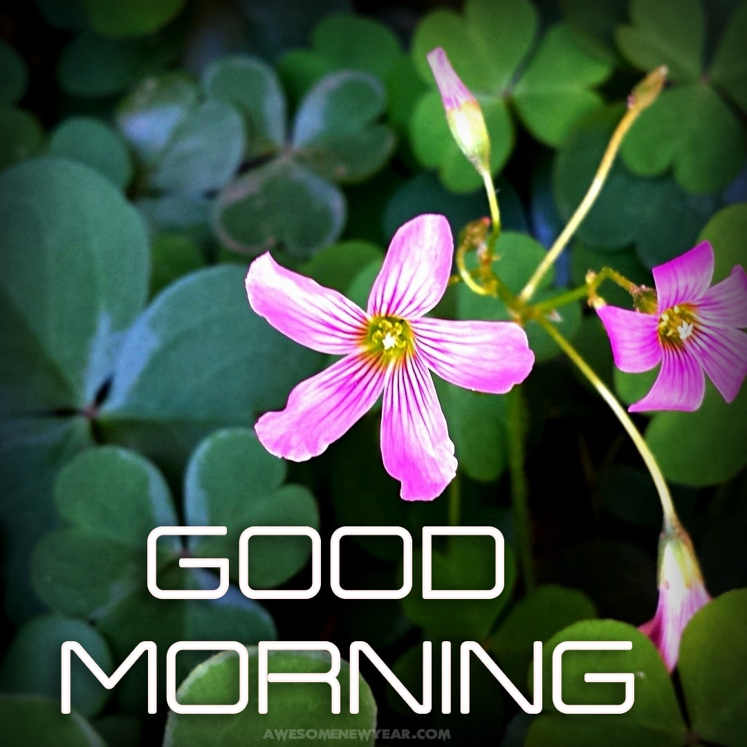 Good Morning Images With Flowers Gud Mrng Images