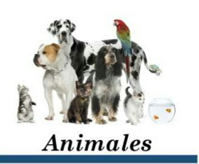 http://curiosidades-2020.blogspot.com/search/label/Animales