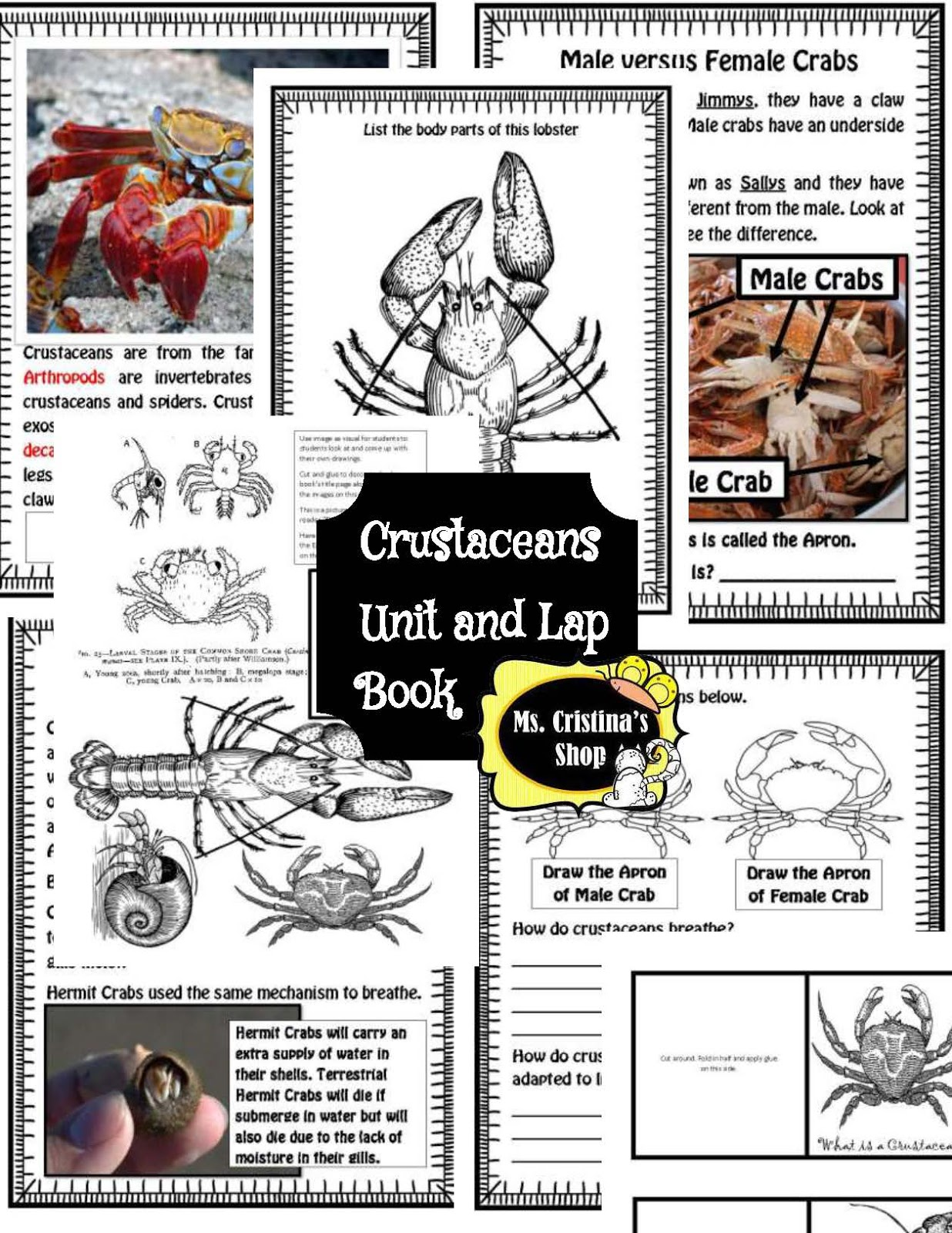 The Hermit Crabs Homeschool Crustaceans Unit Of Study
