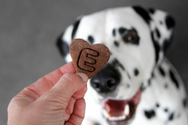 Dalmatian dog smiling at a homemade heart shaped Valentine treat