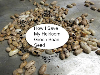 How I Save My Heirloom Green Bean Seed-Vickie's Kitchen and Garden