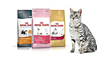 makanan kucing persia Royal cannin