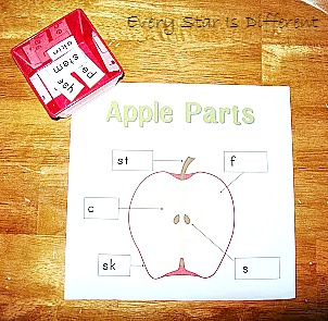 picture relating to Parts of an Apple Printable identify Drop Harvest 7 days 1: Apples - Each individual Star Is Substitute