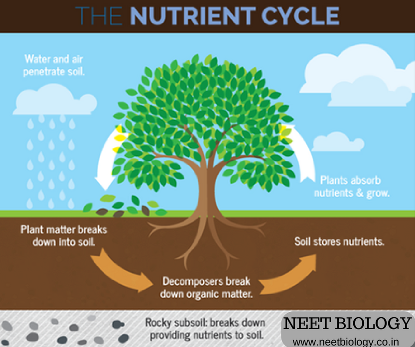 MCQ on Biogeochemical Cycle - MCQ on Nutrient cycle