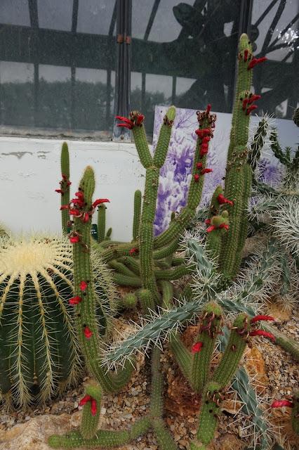 Jardin des Plantes - Serre des déserts et milieux arides