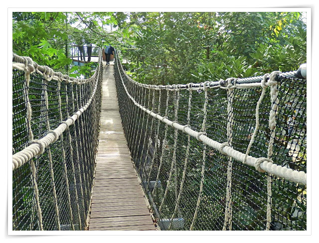 Rope Bridge at the Eden Project, St.Austell, Cornwall