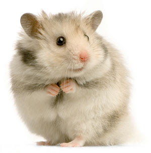 rat in tamil
