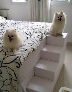 camas altas cães
