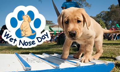Wet Nose Day 2016 Guide Dogs NSW/ACT Puppy demonstration