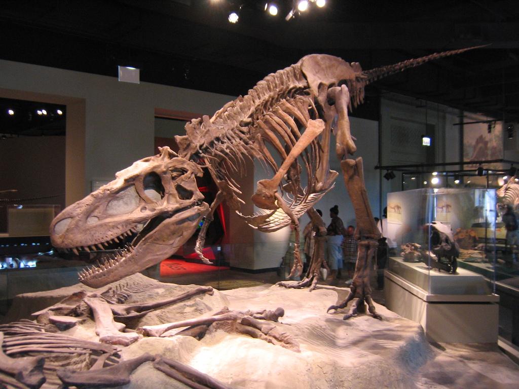 Albertosaurus sarcophagus v Daspletosaurus torosus ...