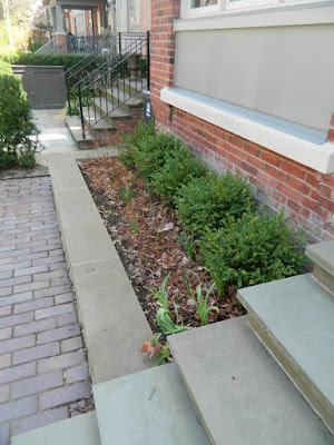 Summerhill Toronto spring front yard garden cleanup before by Paul Jung Gardening Services