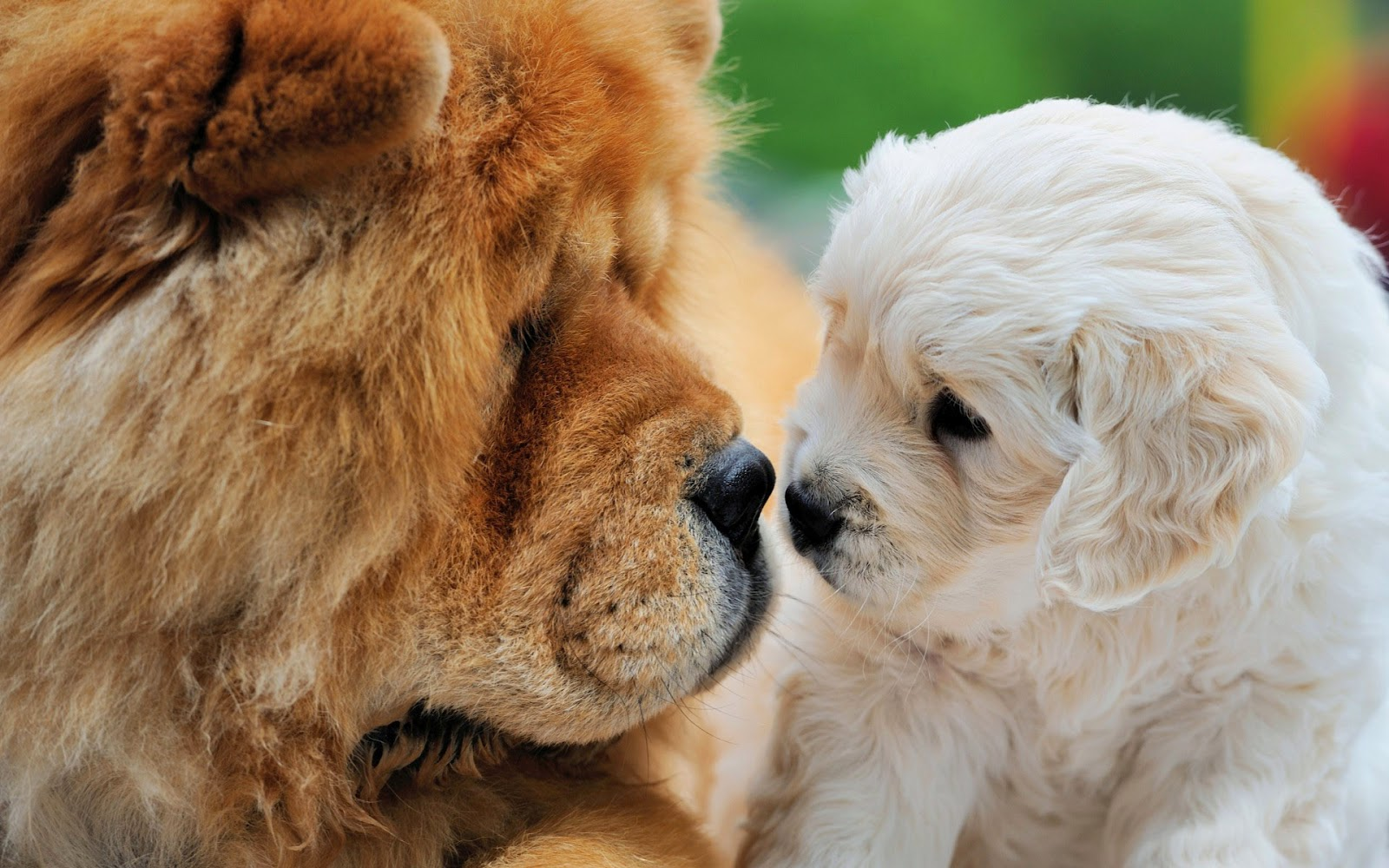 Twee honden die de beste maatjes zijn