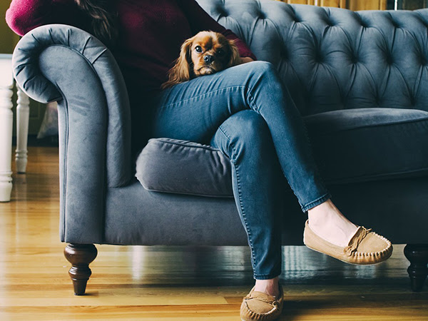Pet-Friendly Decorating Ideas to Protect Your Home